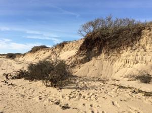 dunes-erosion