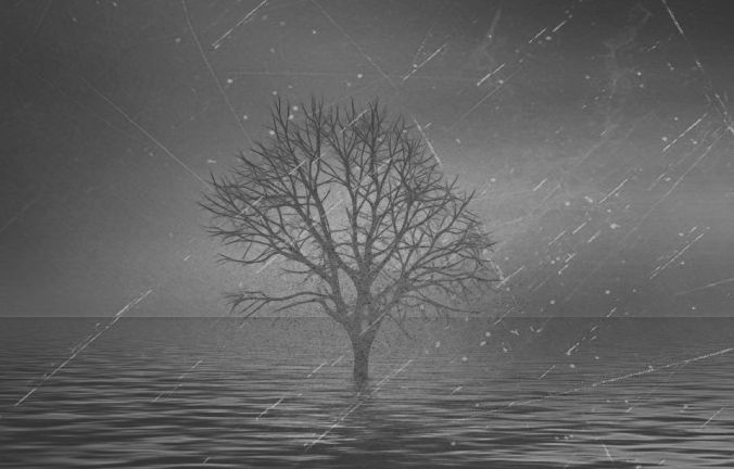 tree standing in water